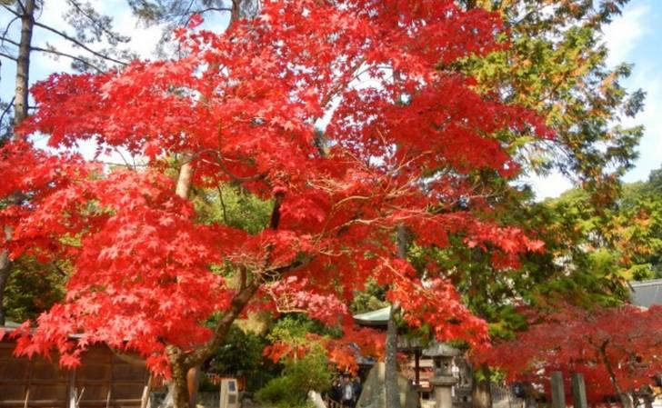 今宮神社は紅葉名所で、さほど混まないのでオススメです