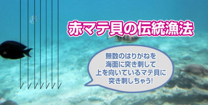 赤マキ貝の突き漁