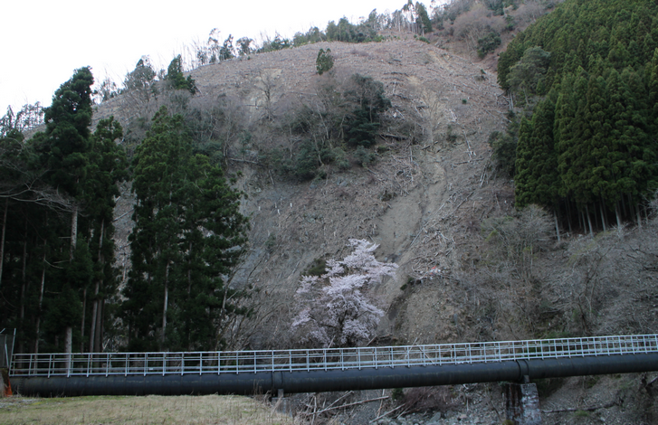 京都市北区「十三石山」にある奇跡の桜