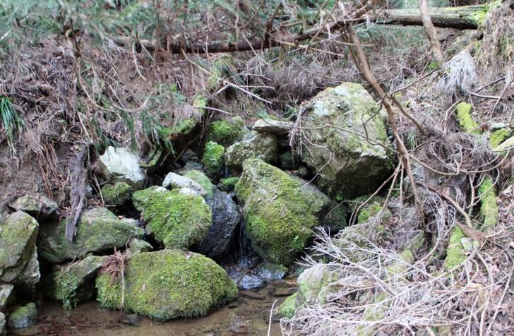 鴨川源流のポイント2
