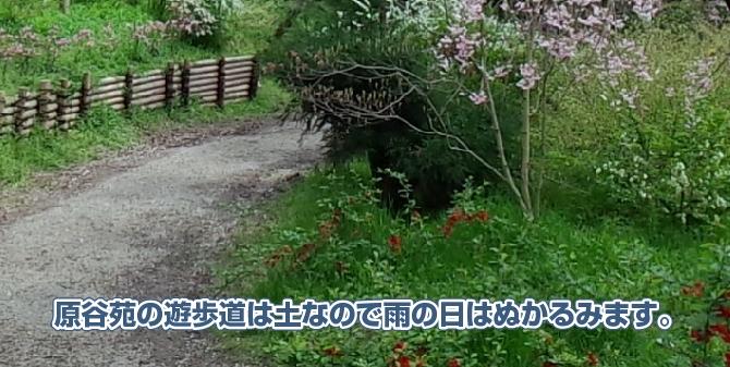 原谷苑の遊歩道