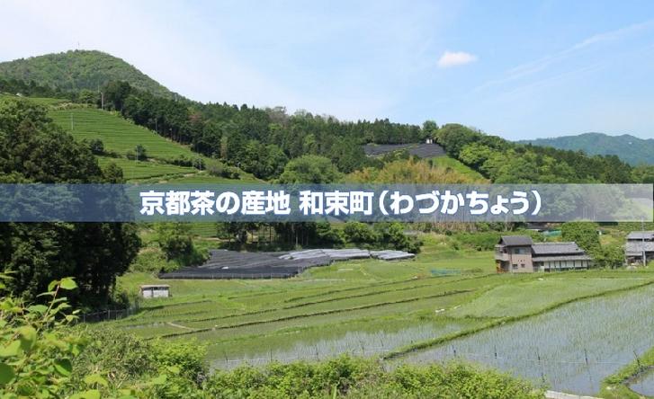 京都府和束町のお茶畑