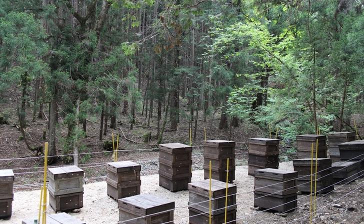 養蜂(ようほう)の風景、ハチミツを採るために巣箱を設置します