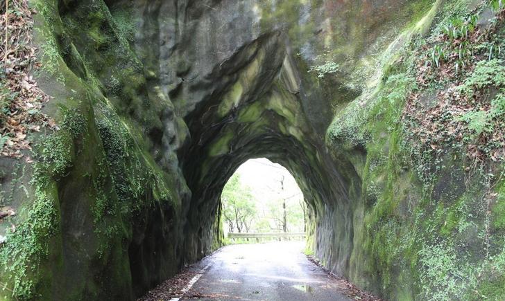 緑のトンネル(小山手)