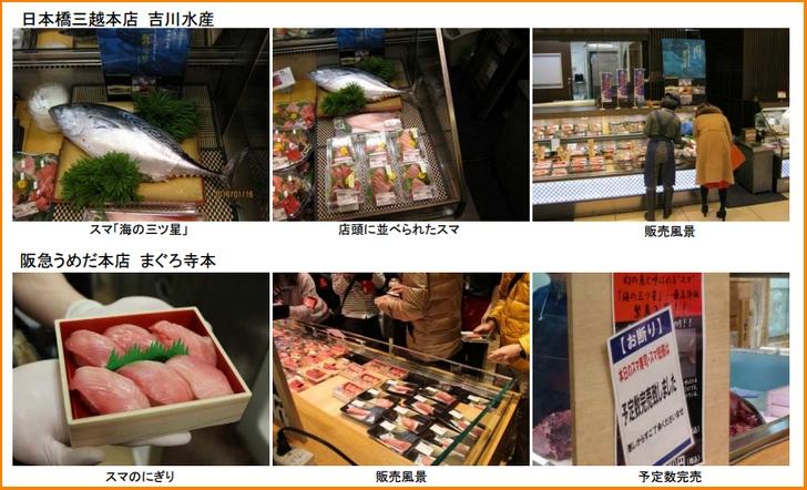 スマの全国出荷は和歌山県が最初(和歌山県広報資料より抜粋)