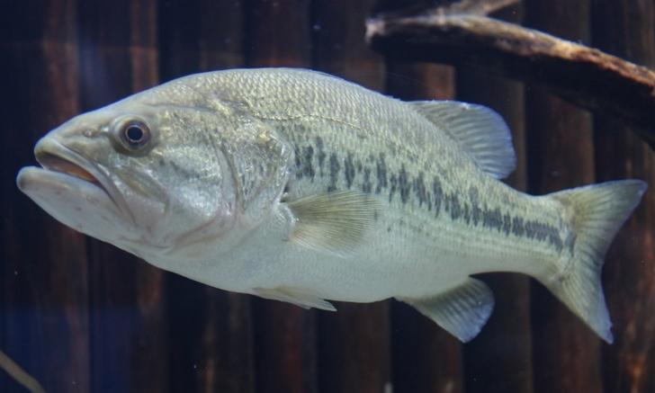 魚の撮影は難易度が高いので苦労しました魚の撮影は難易度が高いので苦労しました