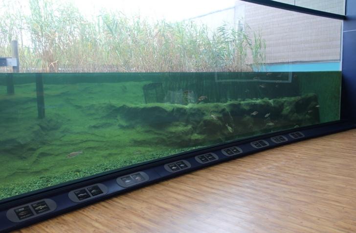 館内には水槽がたくさんあり普通に水族館です