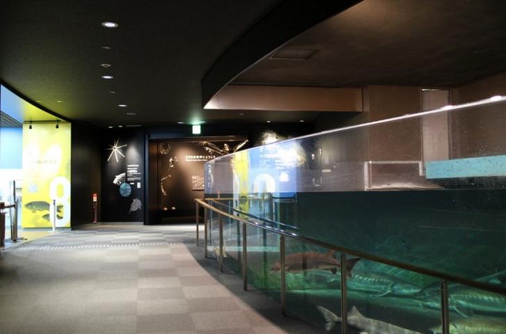 博物館と水族館が一緒に見られます
