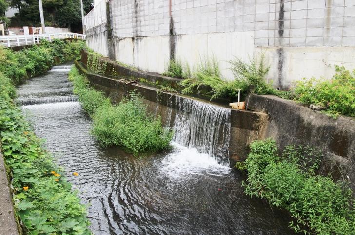 京都市北区「釈迦谷」付近であふれ出す山の水
