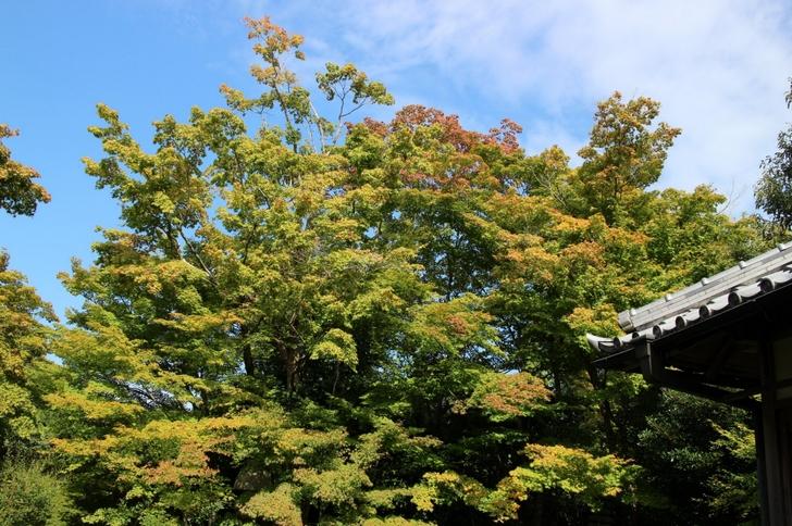 2016年秋の京都・紅葉大調査 今年の紅葉はどんなかんじ?