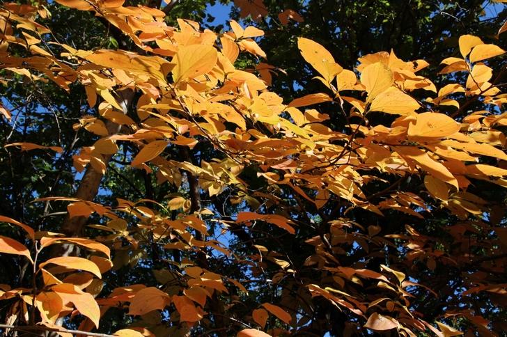 2016年は京都の紅葉を無料で見たい!空いているのはどこ?