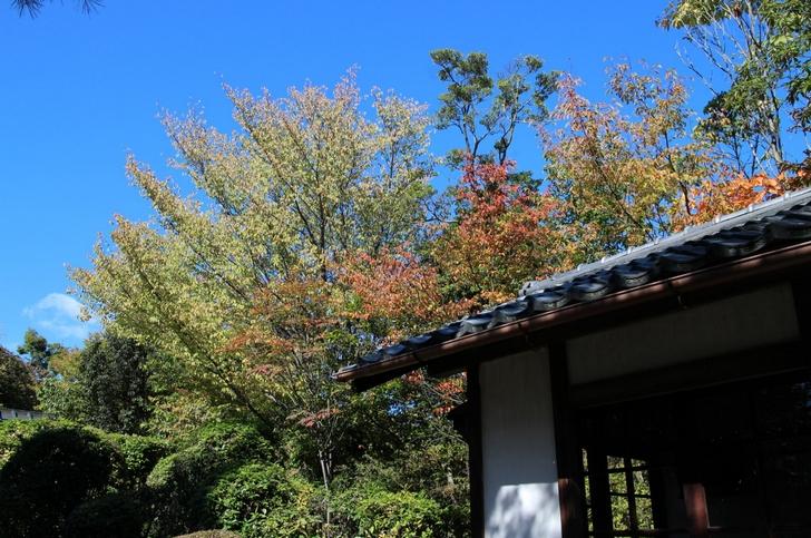 山頂付近からは市内は見えませんが少しだけ紅葉づいた木々を見ることができました