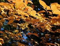 京都 紅葉