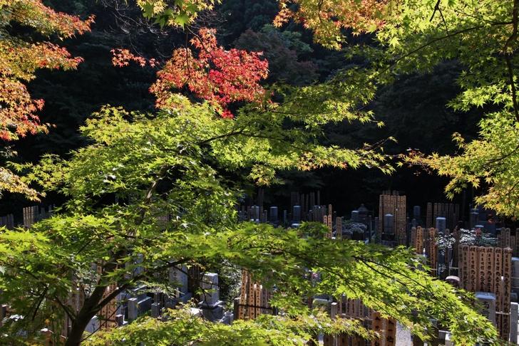 吟松寺は普通のお寺さんですが、通りから紅葉が見えます