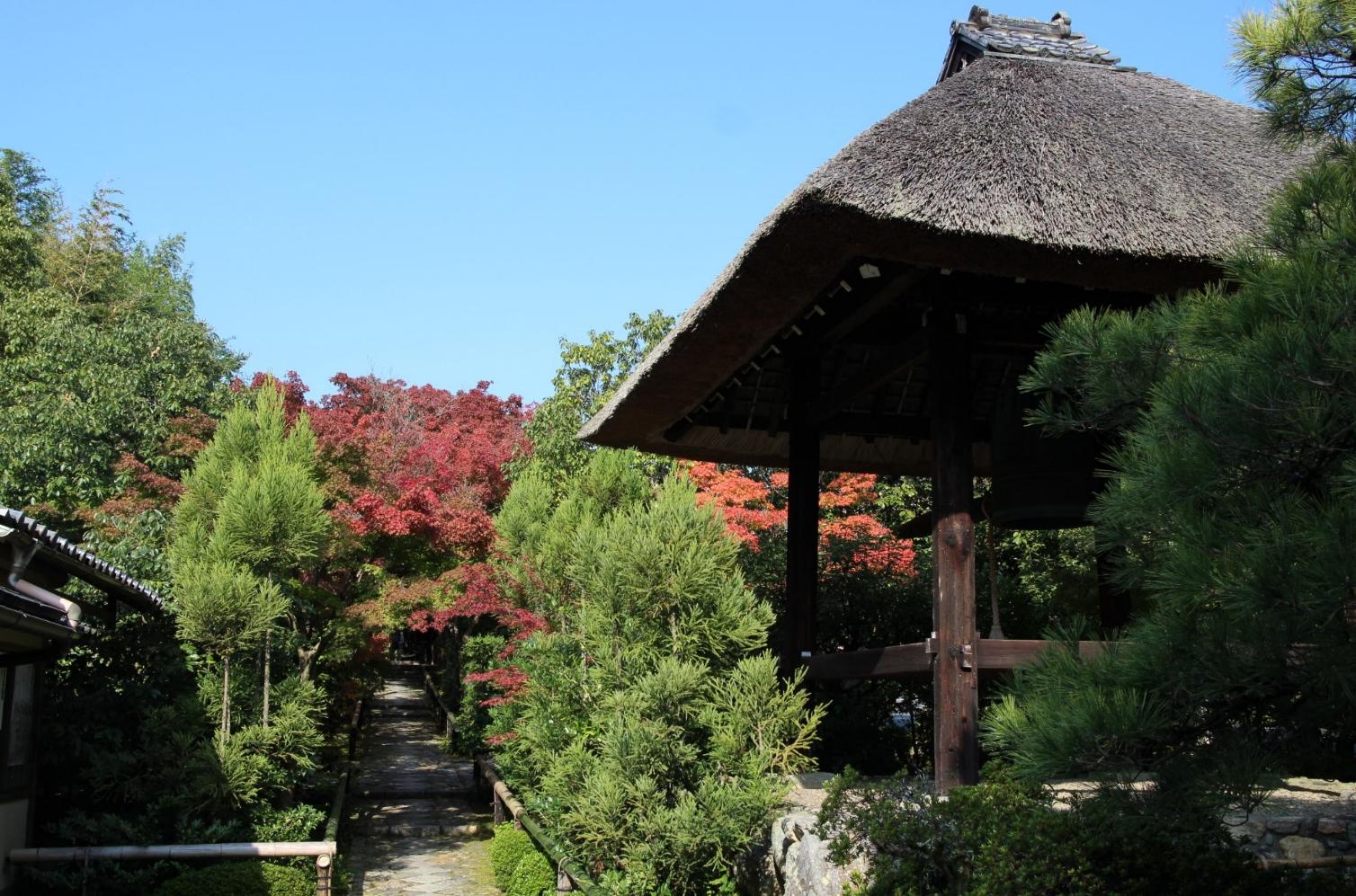光悦寺の紅葉の状況 2016年11月7日撮影