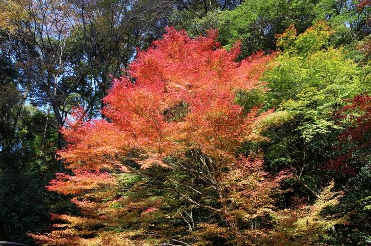 2016年11月12日(土)で紅葉はほぼ広がっていました