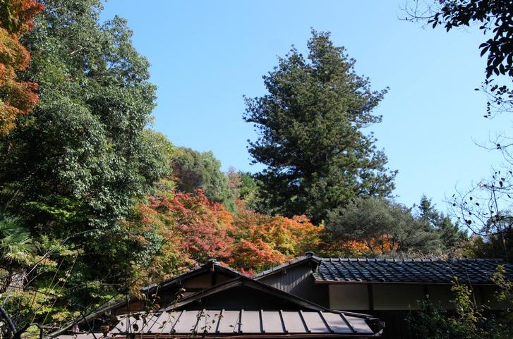 大徳寺讃州寺 2016年11月12日 京都・秋の紅葉風景(1)