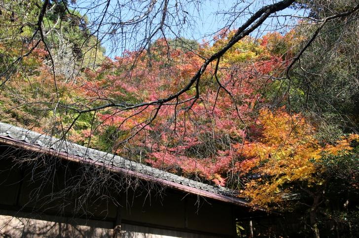 大徳寺讃州寺 2016年11月12日 京都・秋の紅葉風景(2)
