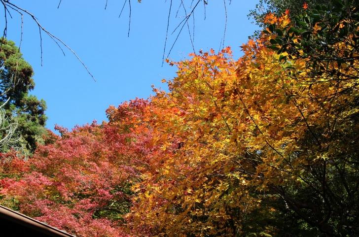 大徳寺讃州寺 2016年11月12日 京都・秋の紅葉風景(3)