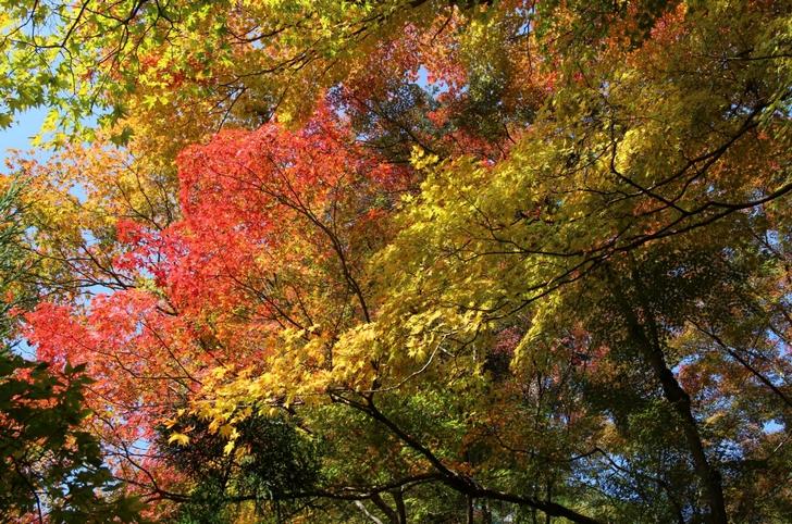 大徳寺讃州寺 2016年11月12日 京都・秋の紅葉風景(4)