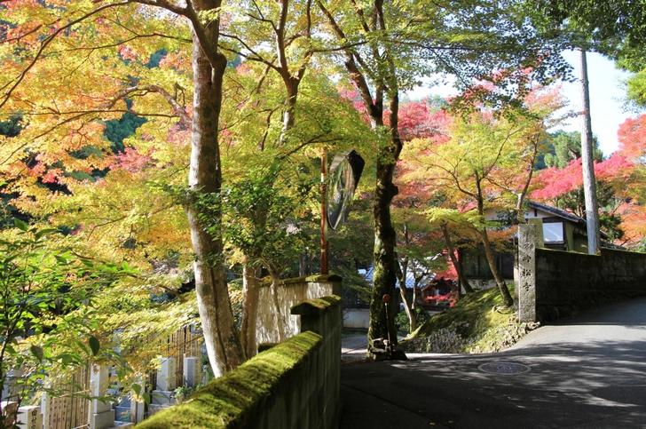 吟松寺は紅葉樹が多く、秋になると知っている観光客はよく見に来ています