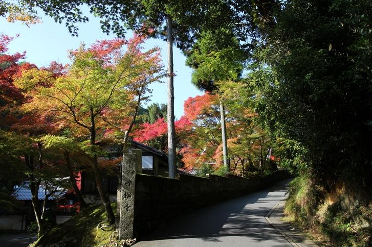日陰から紅葉を撮影すると色鮮やかに撮影できます