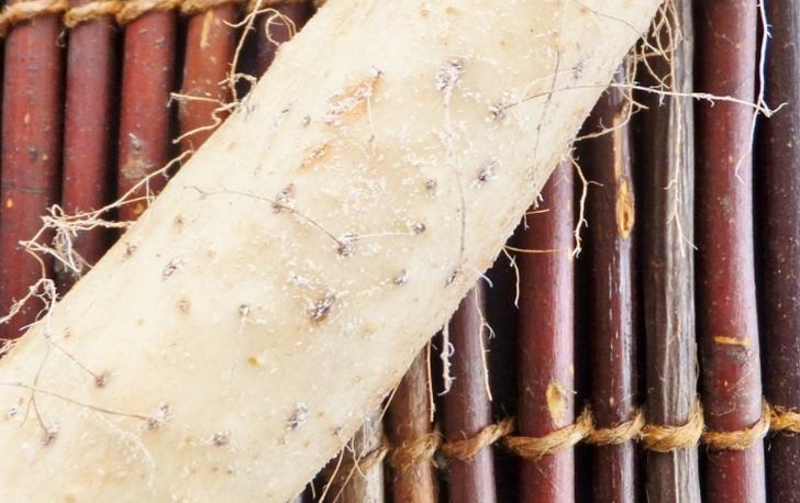 山芋 秋はとろろごはんが食べたい季節です