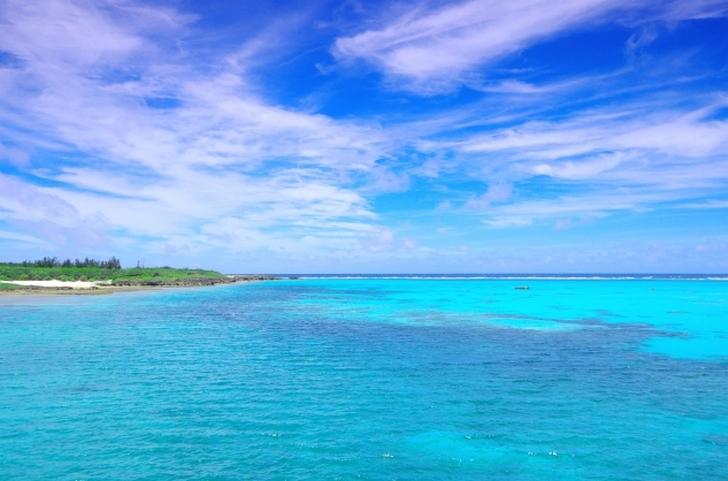 紫やまいも は南西諸島・宮古島あたりで見かけることがあります