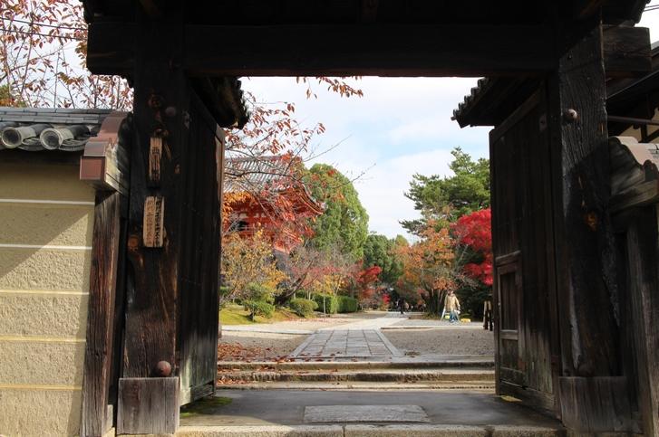 京都・仁和寺 2016年11月15日撮影