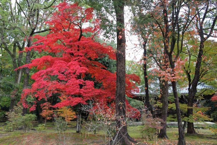 天気はよくありませんがかなりの紅葉です