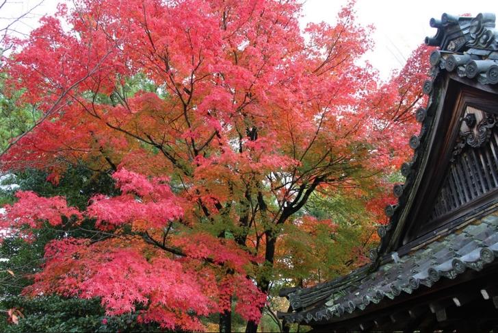 紅葉樹は多くありませんが、見応えのあるものばかりです