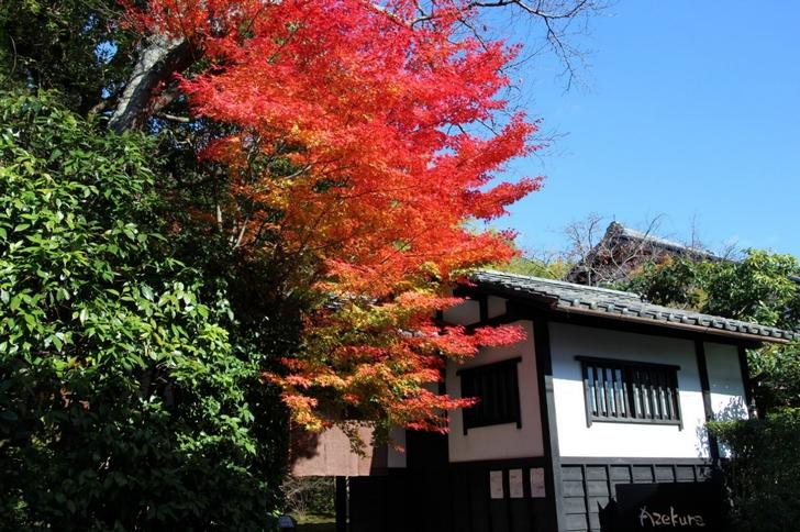 レストラン愛染倉(あぜくら) 門前の紅葉が際立っていました