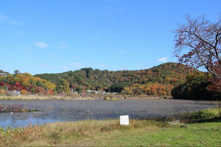 深泥池(みどろがいけ)は秋になると紅葉した山に囲まれます