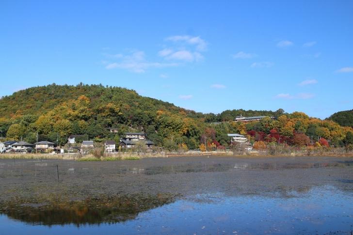 池の奥のほとんどは浮島で冬は島が沈むと言われています
