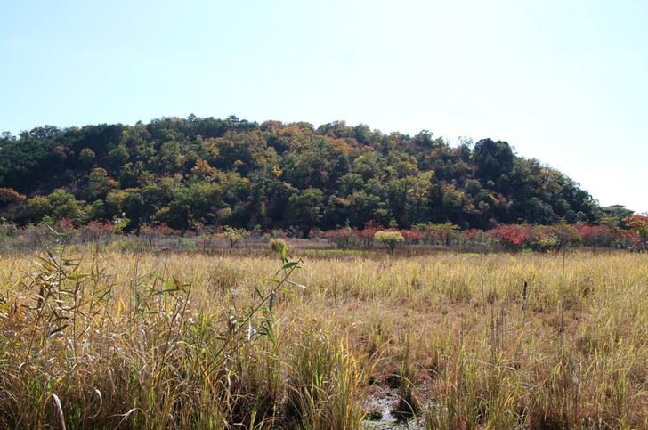 水域の奥にある湿原地帯、水の上にあり「浮島」と呼ばれます