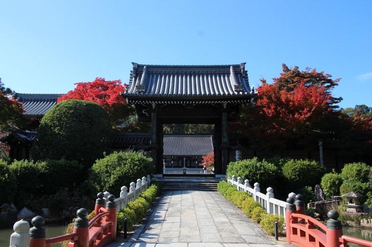 立派な門があり池や紅葉がきれいです