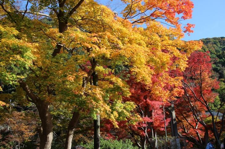 京都・八瀬比叡山口の紅葉(撮影日:2016年11月17日)