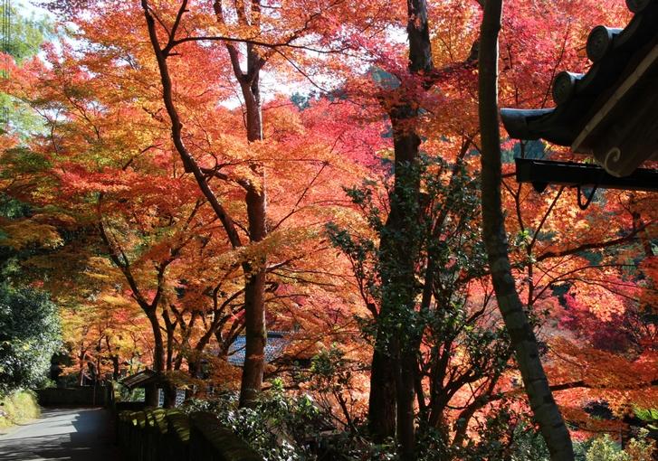 2016年11月から和歌山では地震が多発しています