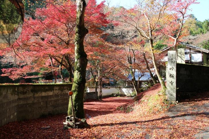 京都鷹峯「吟松寺」では前日の雨で紅葉はほとんど散りました