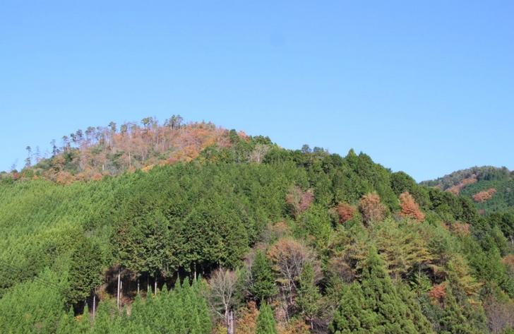 山だから紅葉が早いということはありません