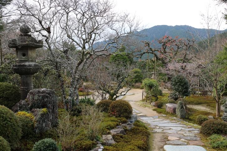 桜を探してお庭を散策