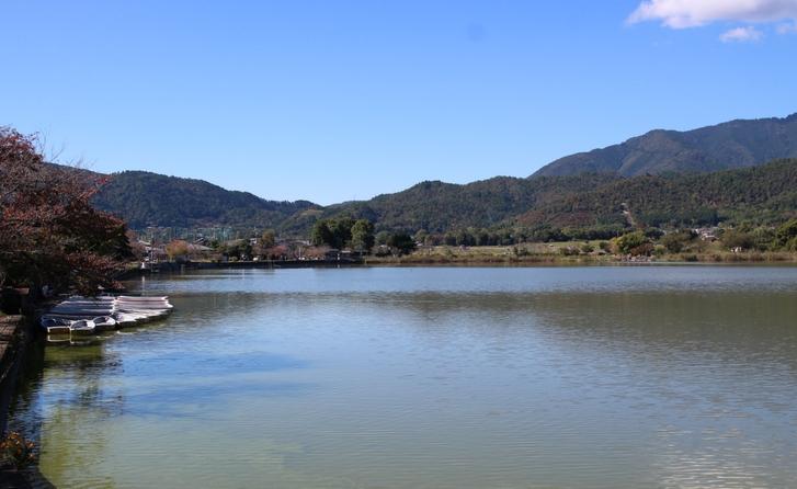京都の広沢池の風物詩を見に行きました!