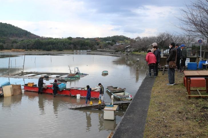 京都・広沢池の冬の風物詩「鯉揚げ」の風景