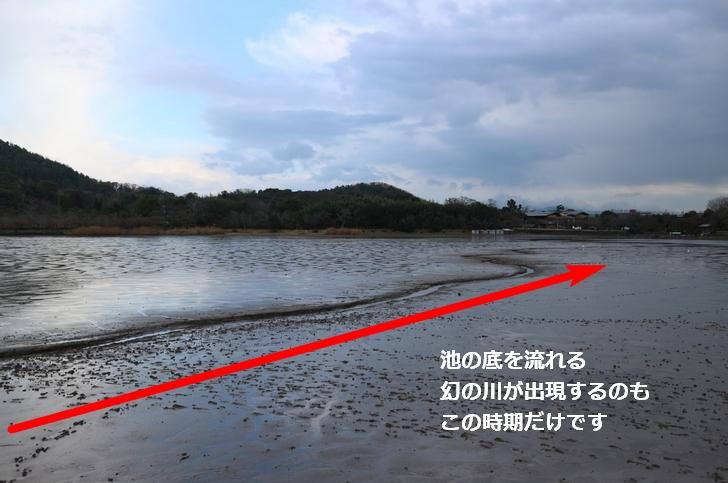 広沢池の中に川が見られるのもこの冬の時期だけです