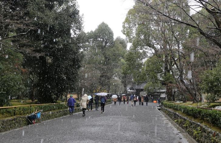 金閣寺に入ると雪が強くなっていきます