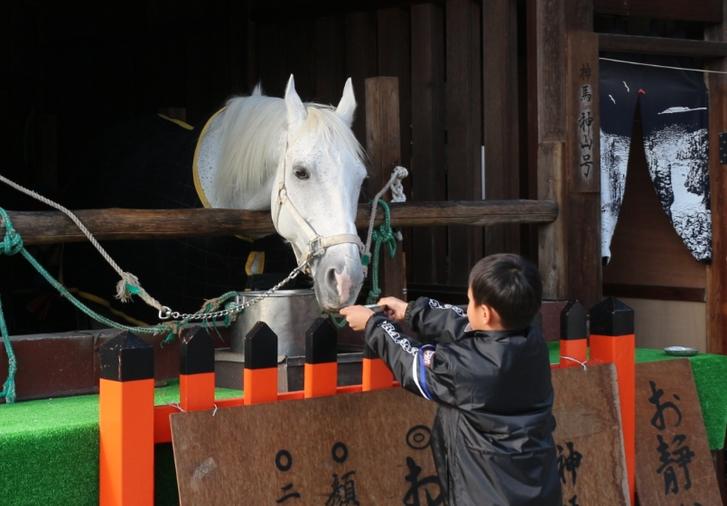 上賀茂神社の白馬、ニンジンを食べさせるイベントはいつも実施されていますが太らないのでしょうか?