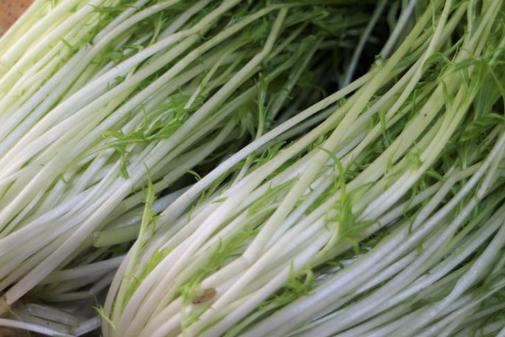 水菜は葉の部分がギザギザで茎のシャキシャキ感を味わう京野菜です