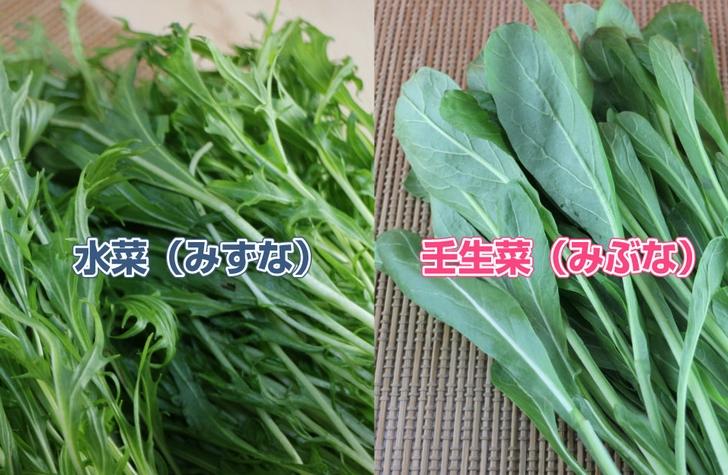 水菜(切水菜)と壬生菜(丸水菜)の違いは葉っぱの形