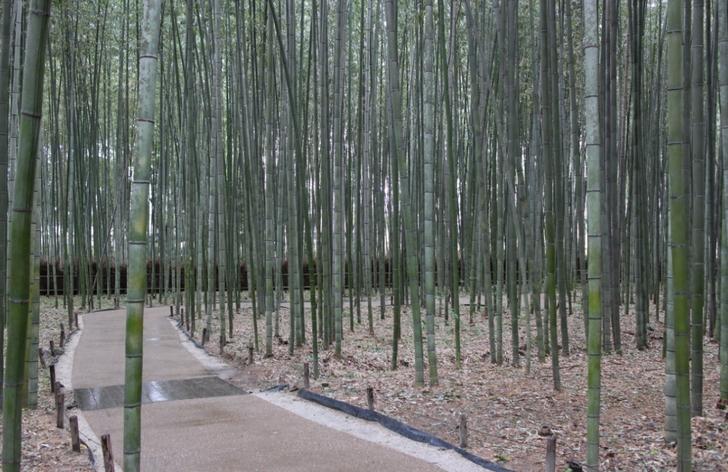 京都・嵐山の「嵯峨野 竹林の道」の近くです