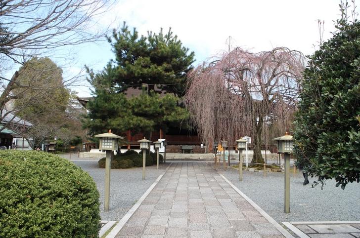 千本釈迦堂の見ごろは4月8日頃になると思います